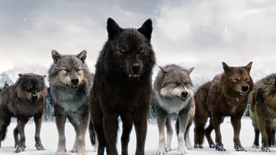 manada de lobos de crepusculo